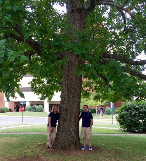 The favorite Chestnut Oak of Casey Maggard and Cory Schuler in September 2015