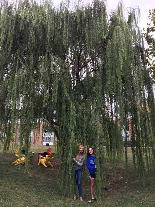 The favorite weeping willow of Heather Omeltschenko and Haley Anderson in October 2016