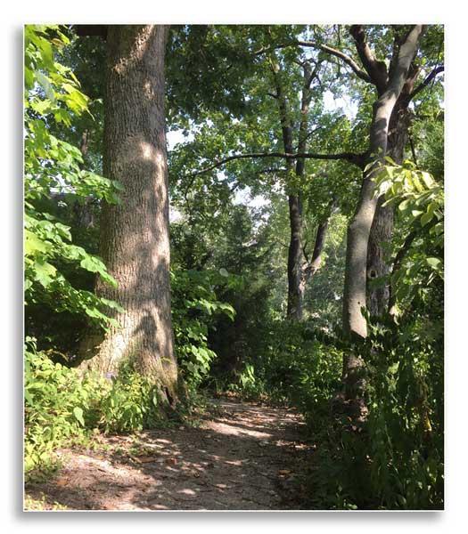 Mathew's Garden at the University of Kentucky, home to over 250 species of plants (J. Miller)
