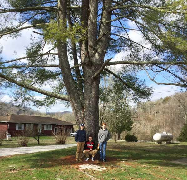 The favorite eastern white pine of NRESci Academy students in March 2017