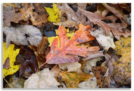 UKnTrees---1---leaf-habitat
