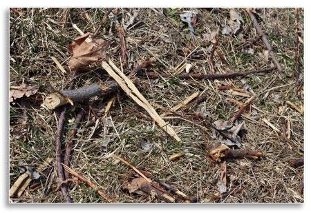 UKnTrees---plant-debris
