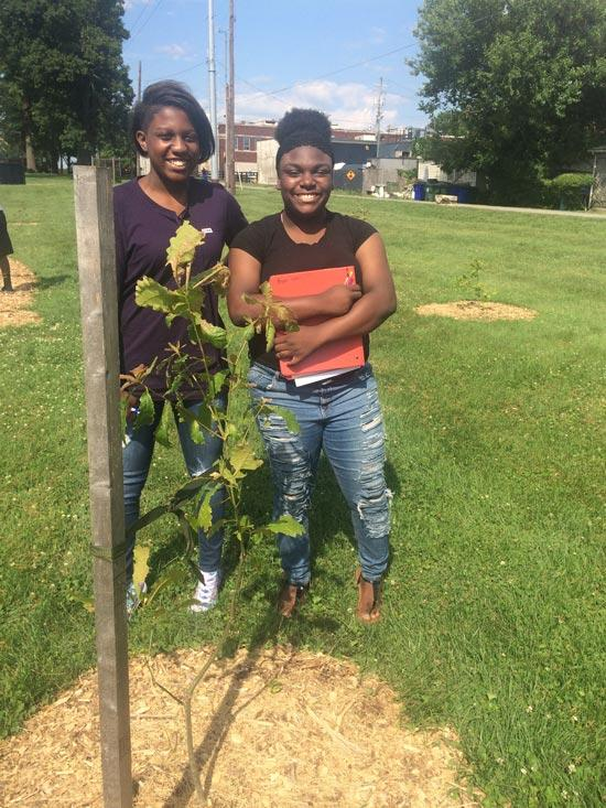 The favorite swamp white oak of Demaria and Jaliyah in summer 2017.